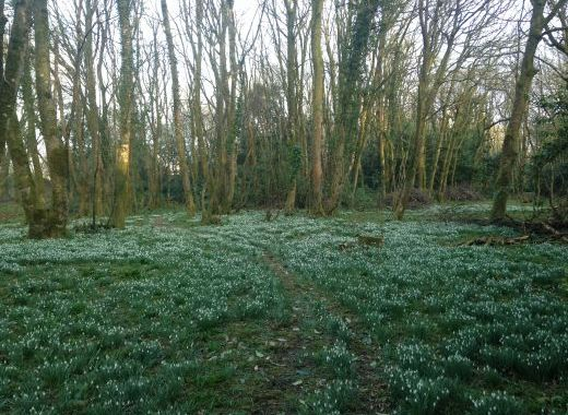 The snow drops in March